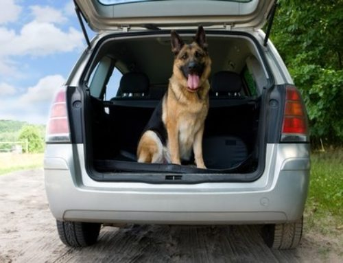 When can your K9 search the inside of a car? – Clay Smith