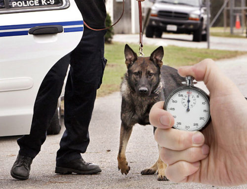 K9's against the clock